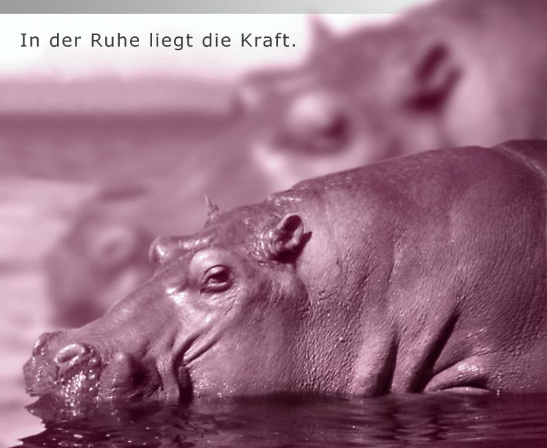 http://www.antibel.de/images/flusspferde2.jpg